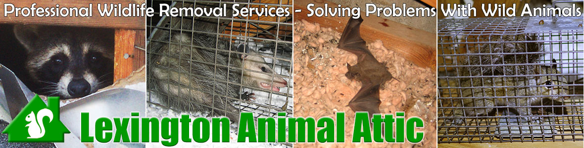 Lexington Animal Attic